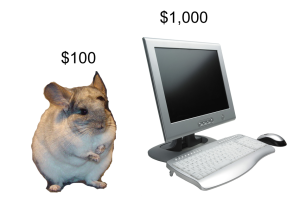 picture of chinchilla = $100. picture of computer = $1,000